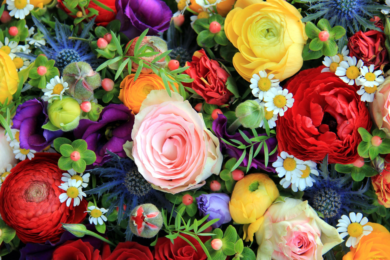 приятные картинки всяких разных цветов алсу